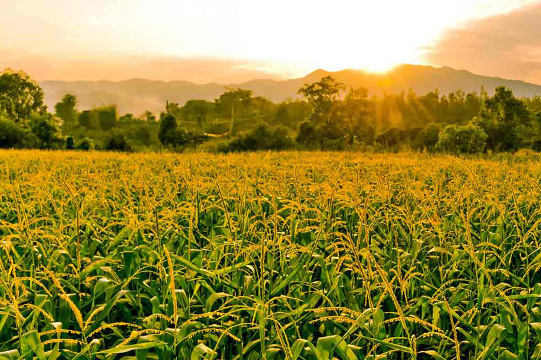 Aramburo Produce Distribution Growers